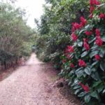 Main private driveway back to Rancho Silencio real estate in Costa Rica