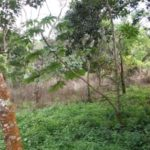 Part of Lot 1 Property For Sale near San Ramon Costa Rica