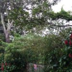 our driveway gate wtih tree San Ramon Costa Rica lot for sale