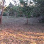 Another part of Lot 1 San Ramon Costa Rica property for sale