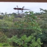 A visitor to our window
