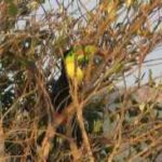 Another view of a toucan