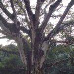 A tree on our land