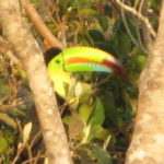 Toucan right near our house