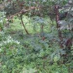 Orchard on Lot 2 Rancho Silencio San Ramon Costa Rica