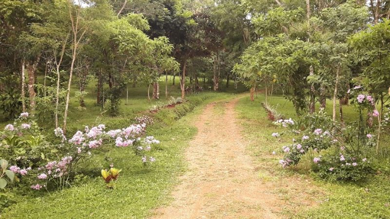 bougainvilleas and driveway 800x450